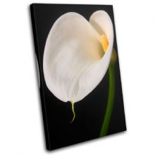 Calla Lily Flowers Floral - 13-1629(00B)-SG32-PO